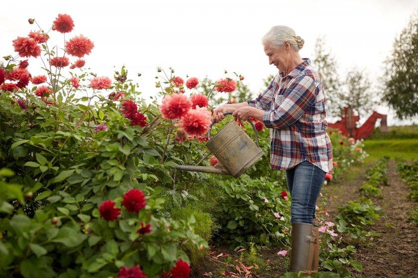 Дача и ее значение для пожилого человека